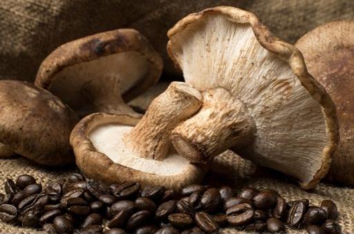 MUSHROOM-COFFEE-BEANS